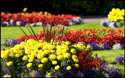 ogród_kwiatowy_kwiaty_zioła_byliny
